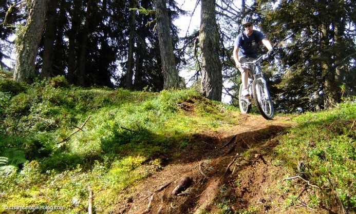 Sunshine, trees, singletrack, roots. What more do you want?