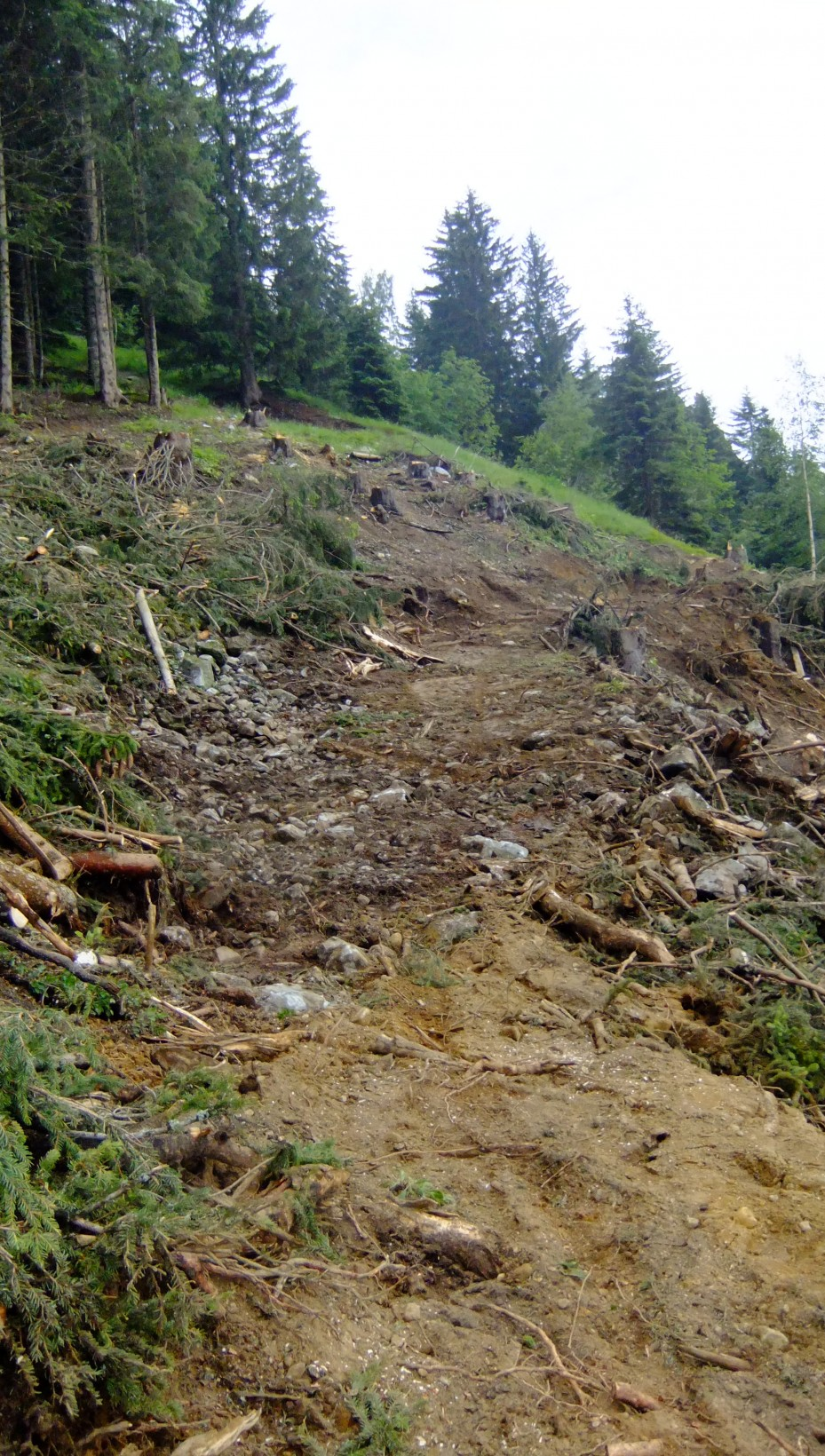 Flegere forestry work